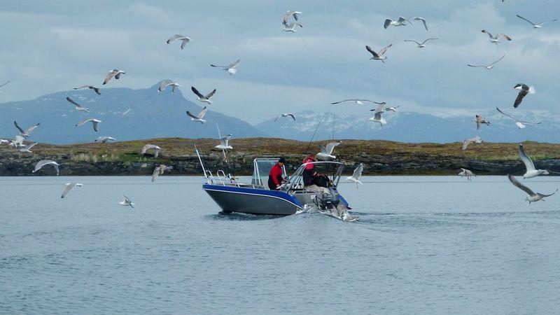 Möwen, die ständigen Begleiter Norway Norge Norwegen Norwegian Sea Vandve Scandinavia Polarcircle Sea Boat Fishing Möwen Seagulls Cold Day