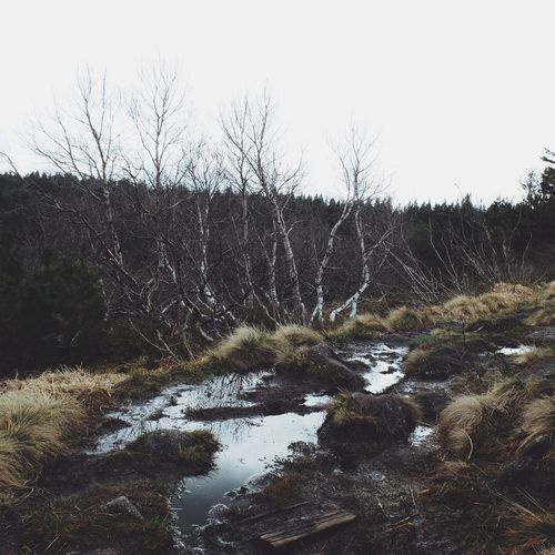 EyeEm Nature Lover Nature Nature_collection Vscogood Vscocam Instagood Instamood