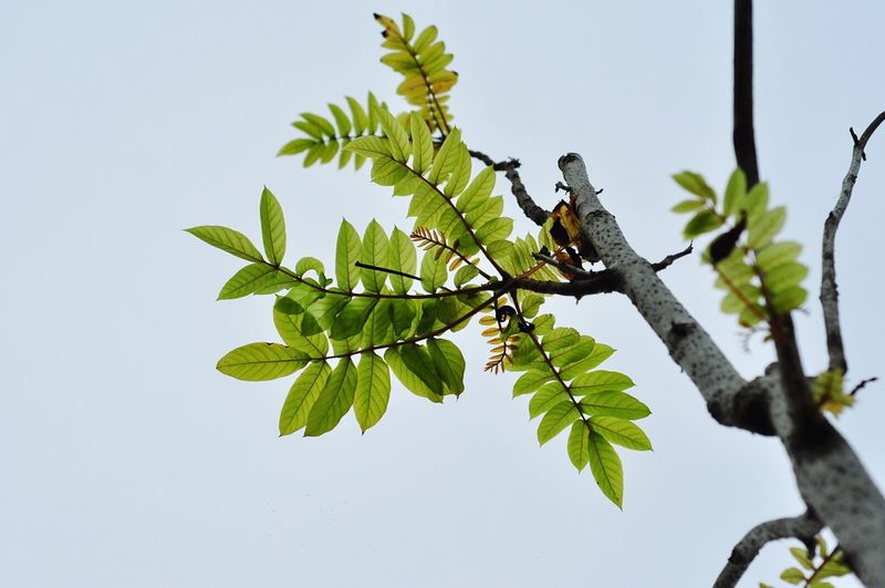 Close-up of lizard on tree against clear sky