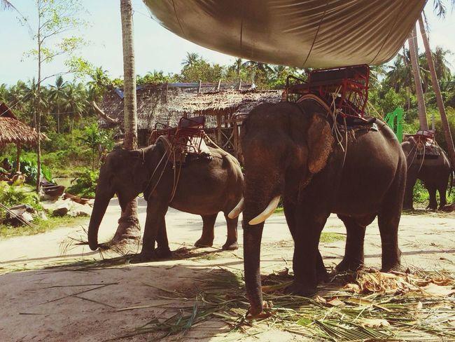 Koh Phan-Gan - Thailand Traveling