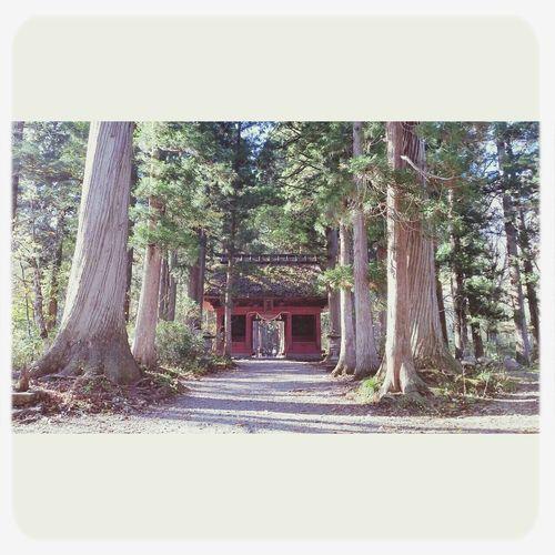 戸隠神社 Oldtree Nature Togakushi Shrine