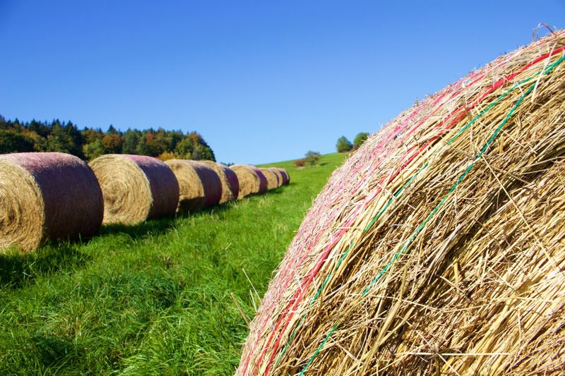 Bales of hay in the field Agriculture Bale  Blue Sky Composition Crop  Day Farm Field Focus On Foreground Grass Grassy Harvesting Hay Landscape Meadow Outdoors Rural Rural Scene Rural Scenes