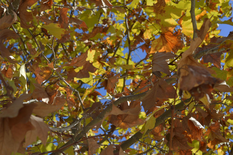 Autumn leaves Aveiro Portugal Autumn Close-up Day Fall Golden Leaves Leaf Nature No People Outdoors Tree