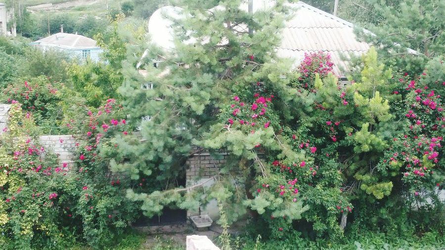 Flowers growing on tree