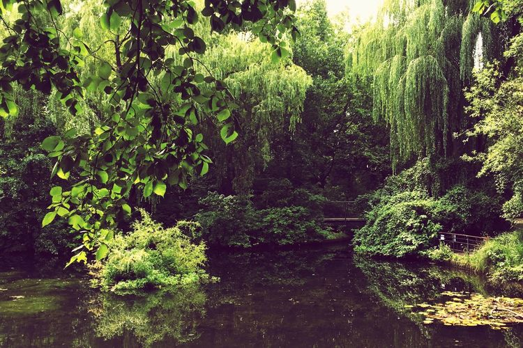 Plant Water Growth Tree Green Color No People Nature