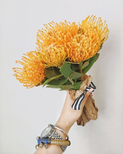 Fynbos Bunch Of Flowers Flowers Hand In Protea Protea Flower Proteas Protea Blossom Bouquet Bouquet Of Flowers Pincushion Protea Yellow Flower Yellow Flowers Human Body Part One Person Flower Human Hand Close-up Nature Flower Head White Background
