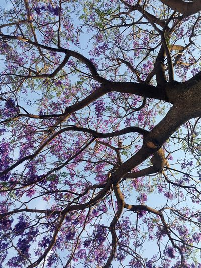 Tree Growth Nature Beauty In Nature Branch Pink Color Low Angle View Flower Springtime No People Blossom Outdoors Fragility Sky Day Freshness Close-up Millennial Pink EyeEmNewHere