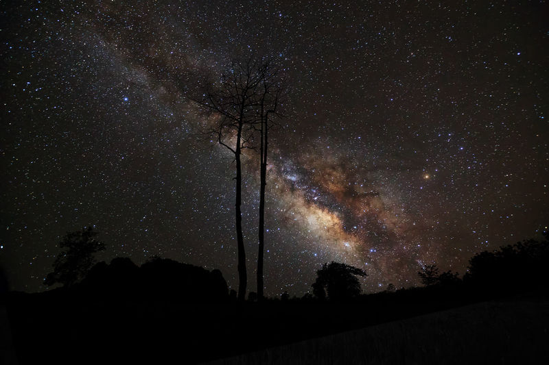 Astronomy Beauty In Nature Constellation Galaxy Landscape Low Angle View Milky Way Nature Night No People Outdoors Scenics Silhouette Sky Space Space Exploration Star - Space Star Field Starry Tranquil Scene Tranquility Tree