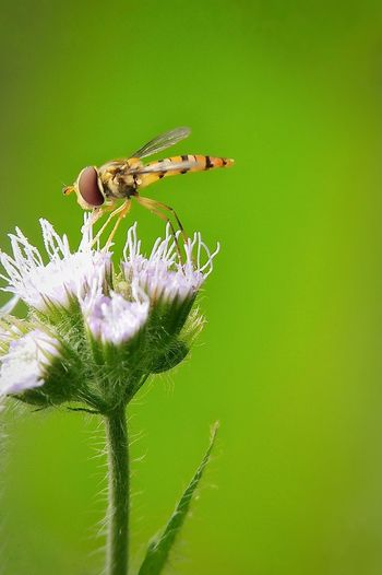 Insect Flower Animals In The Wild Animal Themes Nature Green Color Plant Animal Wildlife No People Fragility Perching Leaf Beauty In Nature Focus On Foreground Uncultivated One Animal Side View Outdoors Full Length Day