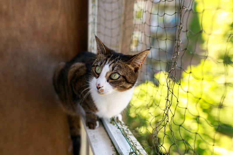 her favorite spot Animal Themes Balcony Cat Close-up Day Domestic Animals Domestic Cat Feline House Cats Mammal No People One Animal Outdoors Pets Portrait Summer Whisker