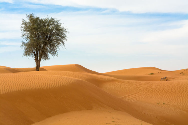 Scenic view of lone tree in desert