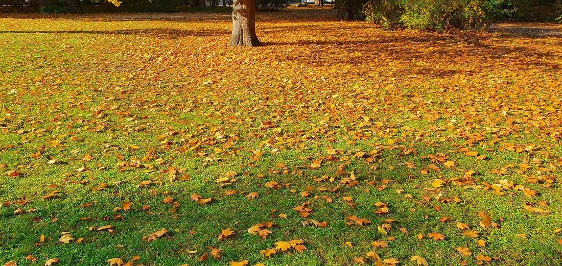Sunlight falling on leaves in park