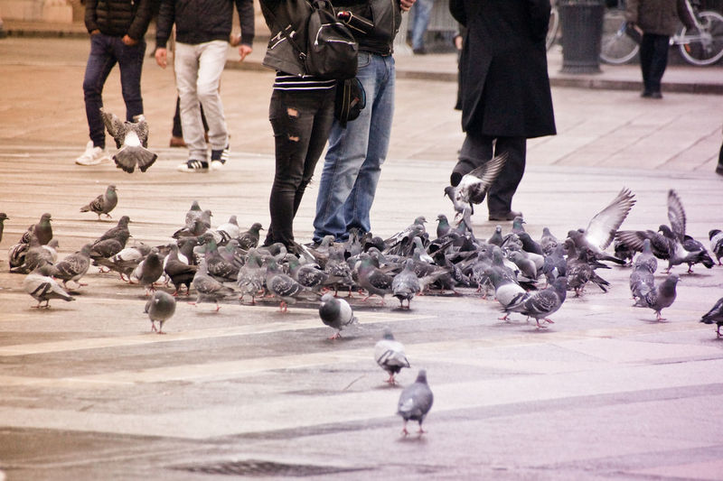 Low Section Of People By Pigeons On Street