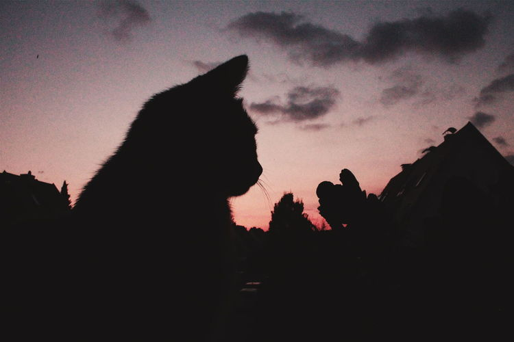 Silhouette cat against sky during sunset
