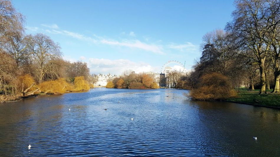 Feel The Journey London London Parks St James Park  St James Park London  Beautiful Enjoying Life Taking Photos Trees Experience Happiness Enjoying The View Enjoying Myself