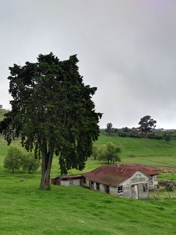 Tree Old Buildings Outdoors Landscape No People Sanatorio Durán