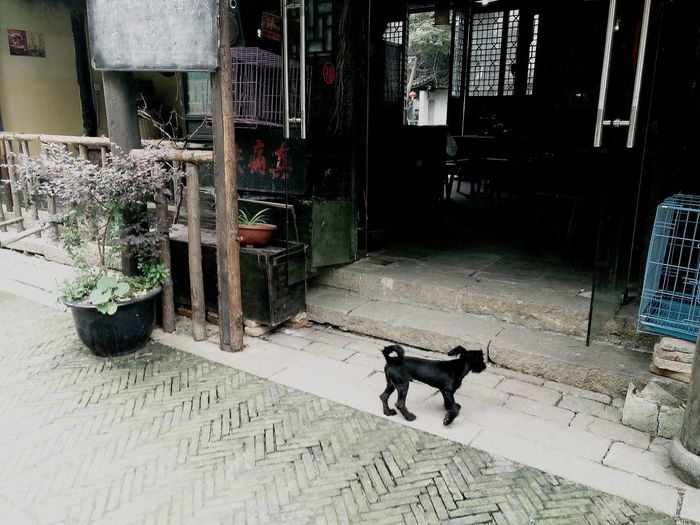 Suzhou, China Mudu Ancient Town The Week Of Eyeem Dog Potted Plant Animal Flagstones