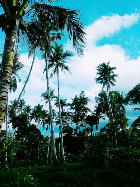 Check This Out Taking Photos Enjoying Life Hanging Out Hello World Relaxing RuralTreasures  Rural Scenes Rural Living Palm Trees