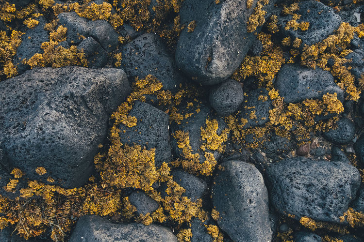 Natural Pattern Nature Rock Above Backgrounds Beach Black Grey Pattern Pebble Volcanic Rock Yellow Fresh On Market 2018
