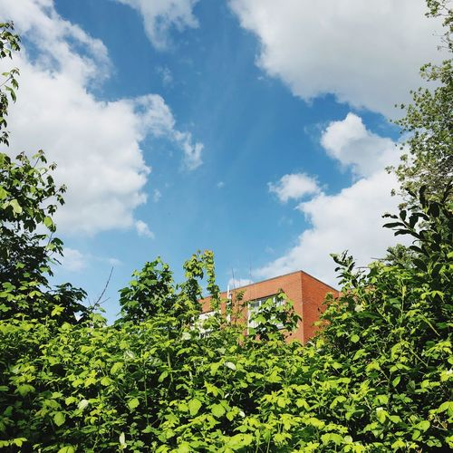 Cloud - Sky Sky Architecture Plant Tree Nature Built Structure Building Exterior Low Angle View Green Color House City Day Growth Adventures In The City