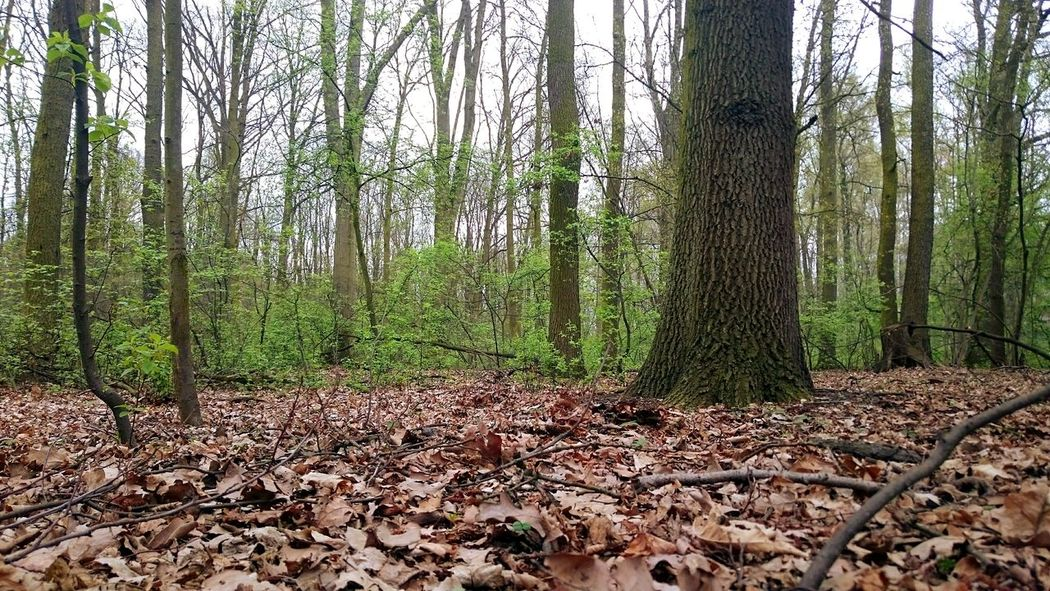 Hanging Out Taking Photos Relaxing Enjoying Life Trees Beautiful Surroundings Forest XPERIA Z3compact