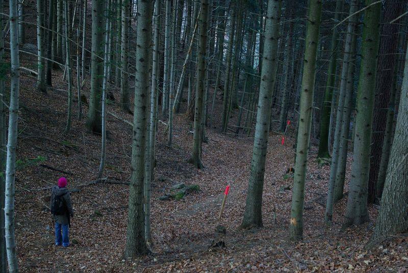 Mystery forest Showcase: December Forest In The Forest Forest Path Forestwalk Wood Woods Trees People And Places Dark Dark Woods Dark Wood People Of EyeEm Myself Mysterious Walking Around Walking Walk This Way Little Red Riding Hood Millennial Pink Wanderlust Wandering Wanderer in Schweiz Switzerland