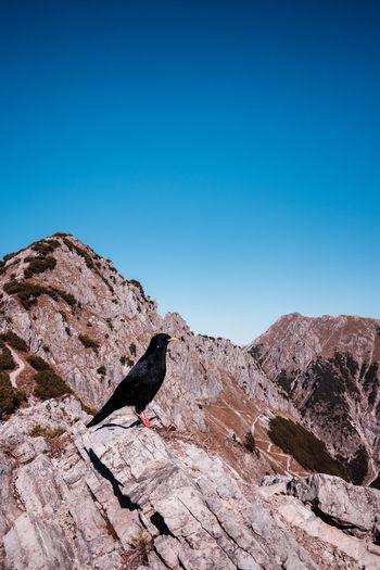 Bird on rock against clear blue sky