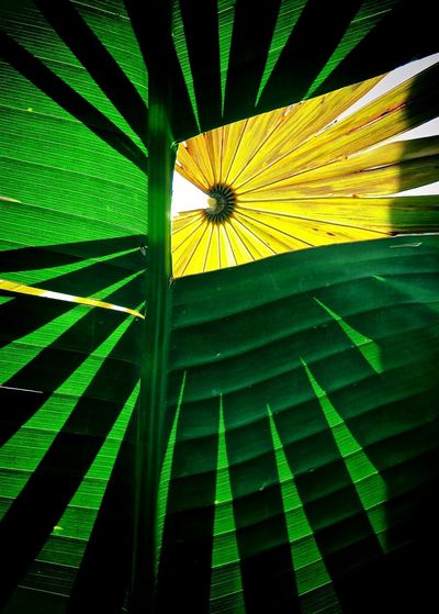 Play Being Creative. Shadowplay Back Light Tropical Plants Sometimes I Like To Create My Own Reality Set Up Arangement