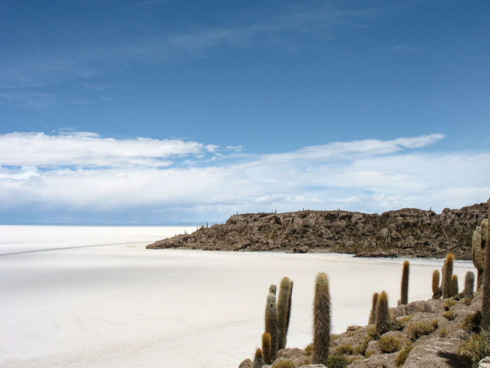 Blue Sky Bolivia Cactus Horizon Over Land Island Landscape Nature No People Outdoors Sal Salt Flats South America Uyuni