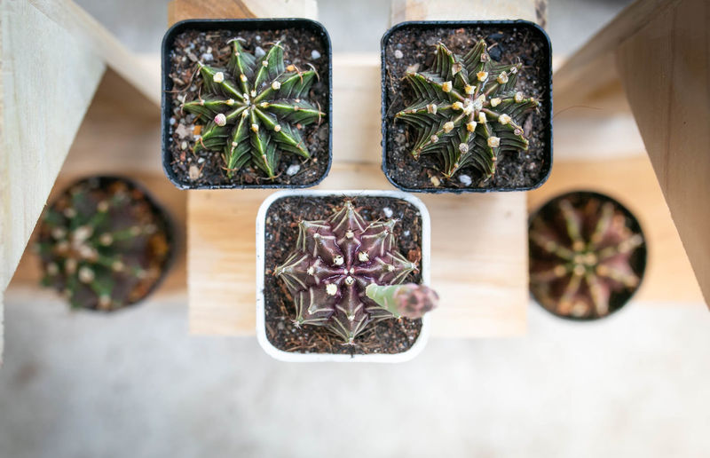 High angle view of plants on table