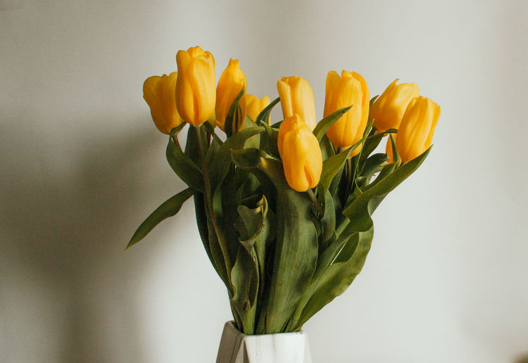 Close-up of yellow tulips in vase