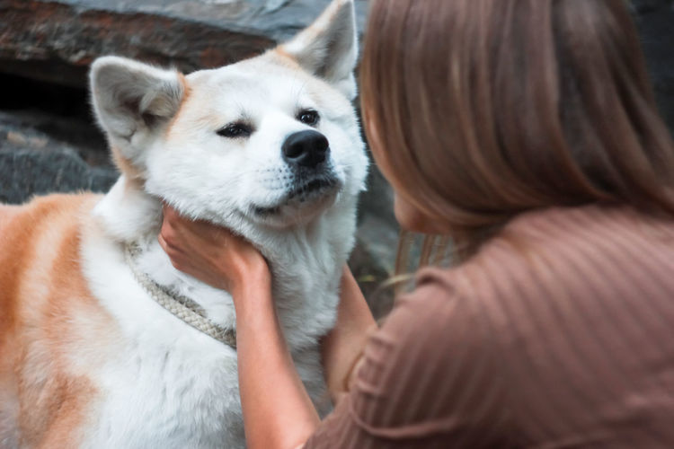 Japanese dog Akita inu portrait with young woman outdoors Akita Adult Akita-inu Canine Care Close-up Dog Domestic Domestic Animals Hairstyle Headshot Mammal One Animal One Person Pet Owner Pets Real People Rear View Vertebrate Women