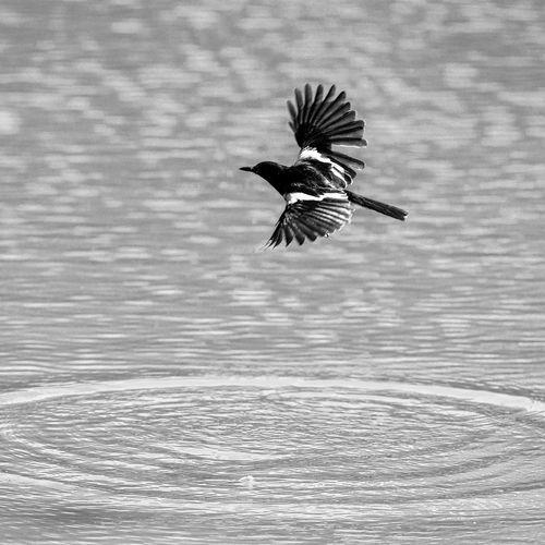 Bird flying over the lake