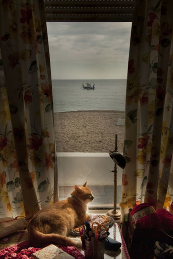 View of a cat looking at sea