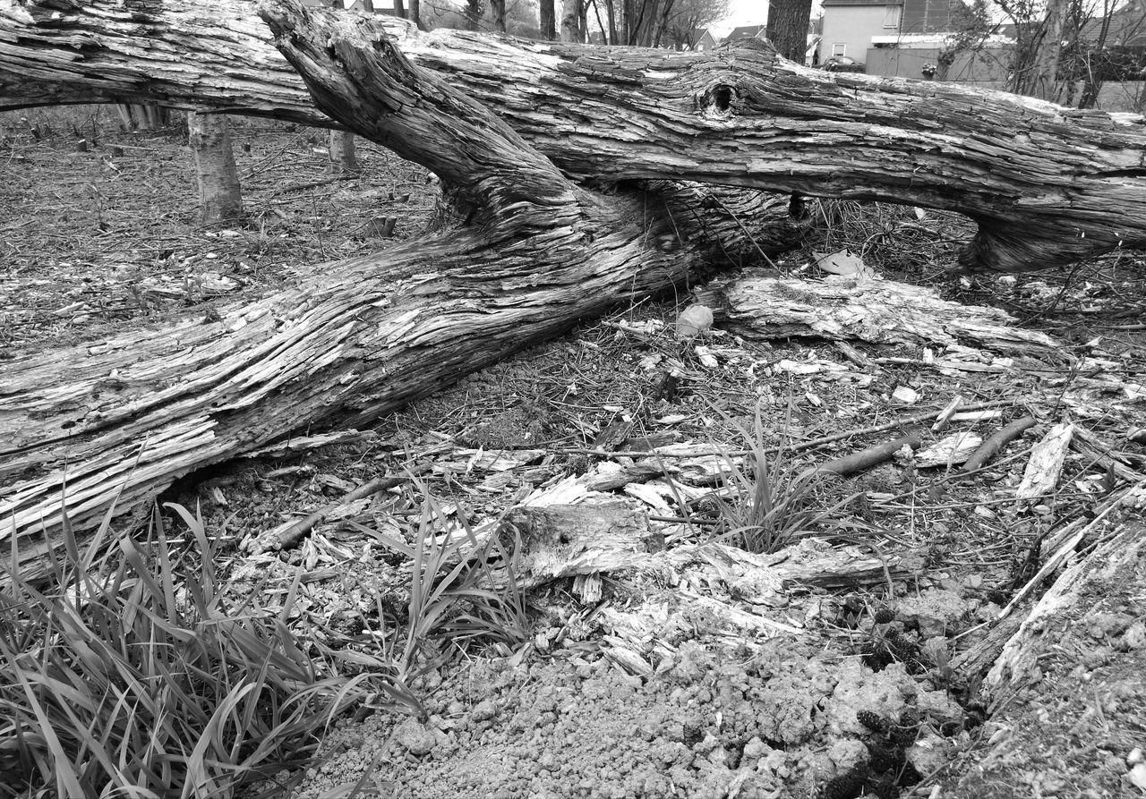 day, outdoors, wood - material, no people, tree trunk, nature, tree, dead tree