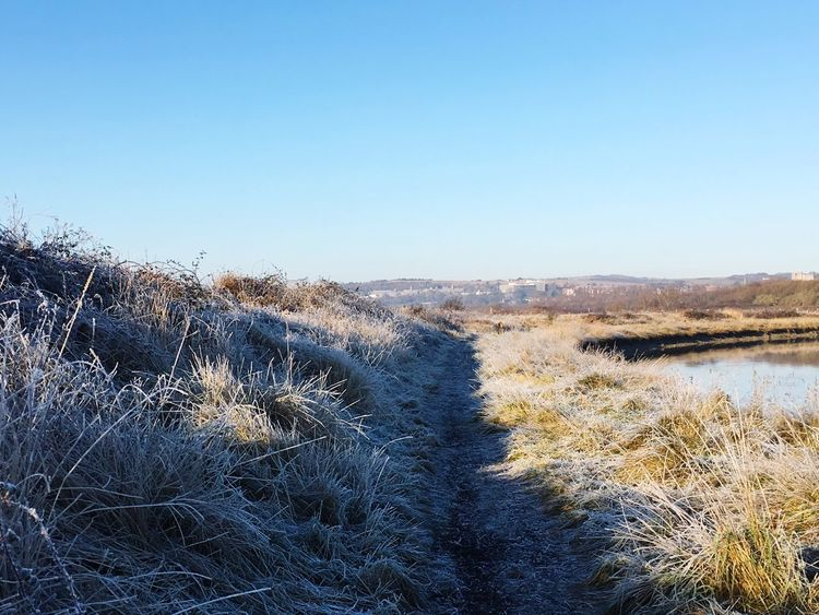 Frosty path Lewes South Downs National Park Southdowns River Ouse Riverside River Path Frosty Frost Grass Day No People Marram Grass Nature Clear Sky Outdoors Tranquil Scene Beauty In Nature