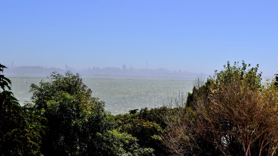 Hilltop View @ Ceasar Chavez Park 2 Berkeley, Ca. 90 Acres San Francisco Bay North Waterfront Panoramic Views Scenic Fog San Francisco Skyline Sailboats Native Schrubs Popular Site For Kite Flying Hiking Trails Nature Beauty In Nature Nature_collection Landscape Landscape_Collection Landscape_photography Former Landfill Sealed 1991 Park Opened 1997 Named After The Leader & Founder Of UFW United Farm Workers Of America