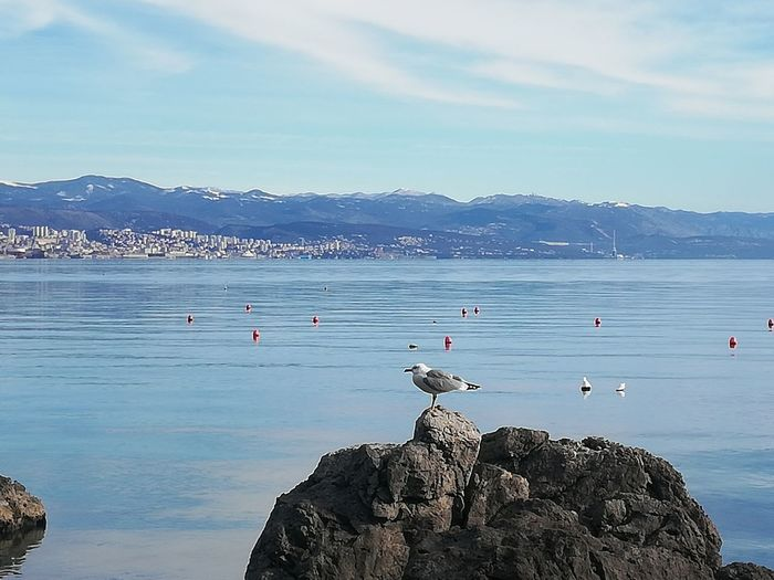 Seagulls on rock by sea against sky