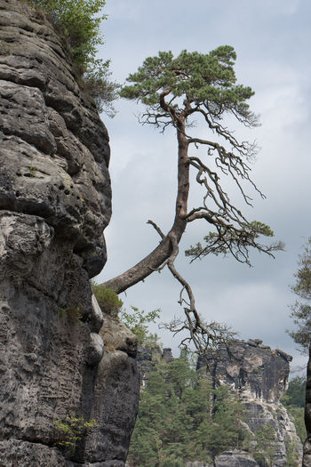 A must-see when being in the region - Die Bastei -the bastion- and the surrounding sandstone needles Bastei Beauty In Nature Branch Day Growth Low Angle View Nature No People Outdoors Scenics Sky Tranquility Tree Tree Trunk