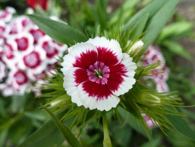 Predicate blossom Beauty In Nature Close-up Day Flower Flower Head Freshness Nature No People Outdoors