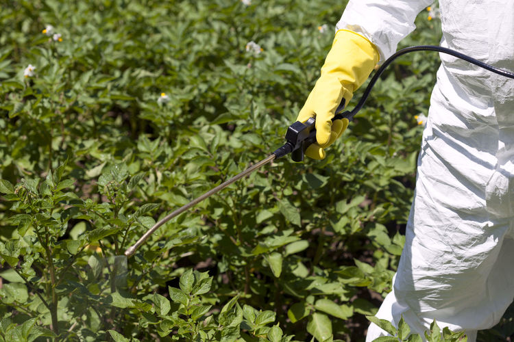 Cropped image of worker spraying pesticide on plants