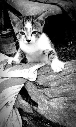 Felino🐱🐈💞 Domestic Cat Pets Domestic Animals Feline Mammal Animal Themes One Animal No People Sitting Indoors  Portrait Day Close-up