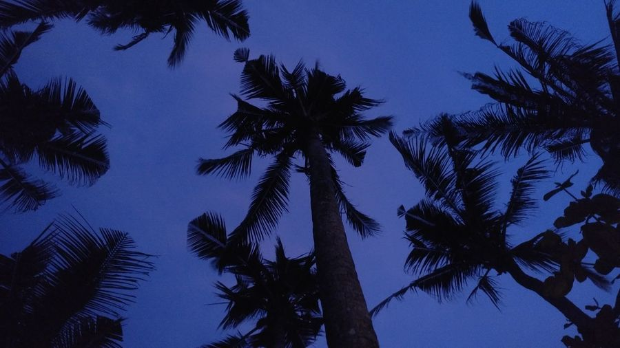 Thenightiscoming Coconut Trees Blue Silhouette Clear Sky