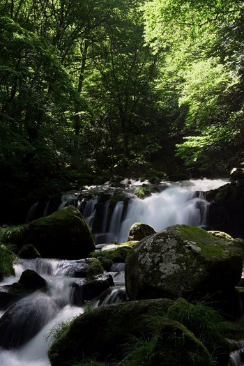 The Journey Is The Destination Waterfall Waterfront Non-urban Scene Beauty In Nature Long Exposure Stones Wildlife & Nature 43 Golden Moments Trees And Sky Green Leaves Traveling Hiking 蓼科大滝 in Saku Nagano Japan Showcase July