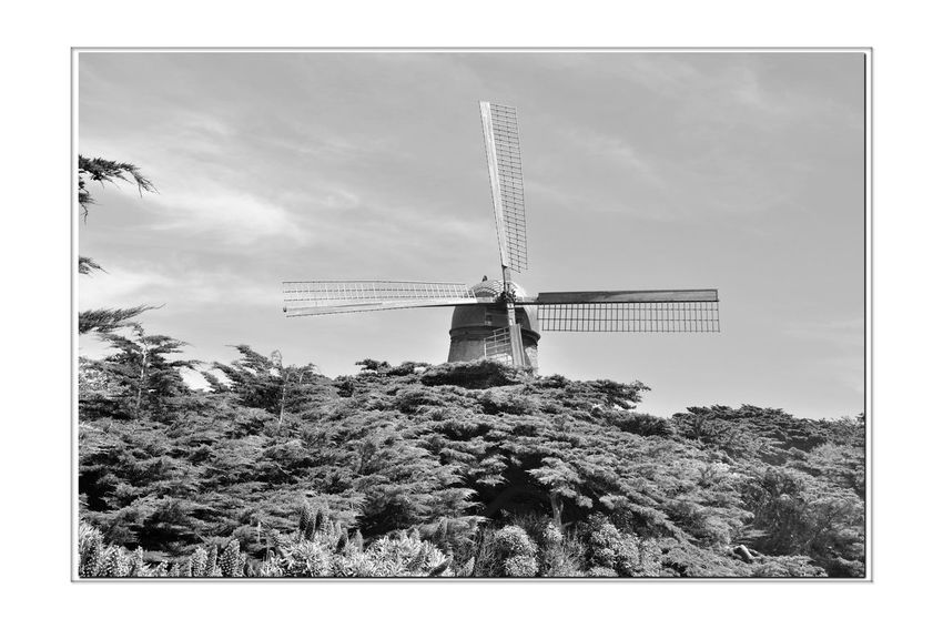 Dutch Windmill @ Golden Gate Park 8 San Francisco CA🇺🇸 North Windmill Dutch Windmill Built 1903 Western Edge Golden Gate Park 95 Ft. High 114 Ft. Sails Pumped 30,0000 Gallons Per Hour Irrigated The Park Wind Power Alternative Energy Engineering Marvel 1913 Replaced By Electric Pumps Fell Into Disrepair By 1950's In State Of Ruins Restoration Began 2000 Completed 2012 Landscape Windmill_Collection Monochrome Lovers Monochrome Windmill Photography Canopy Cypress Trees Designated Landmark No. 147 Black & White Black & White Photography Black And White Black And White Collection