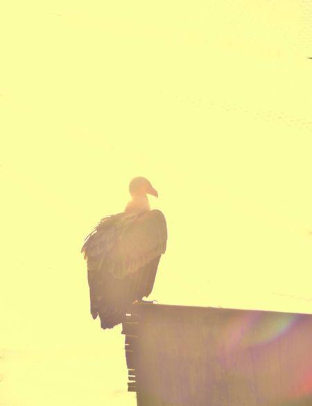 Nature Bird Animal Themes One Animal Animal Wildlife