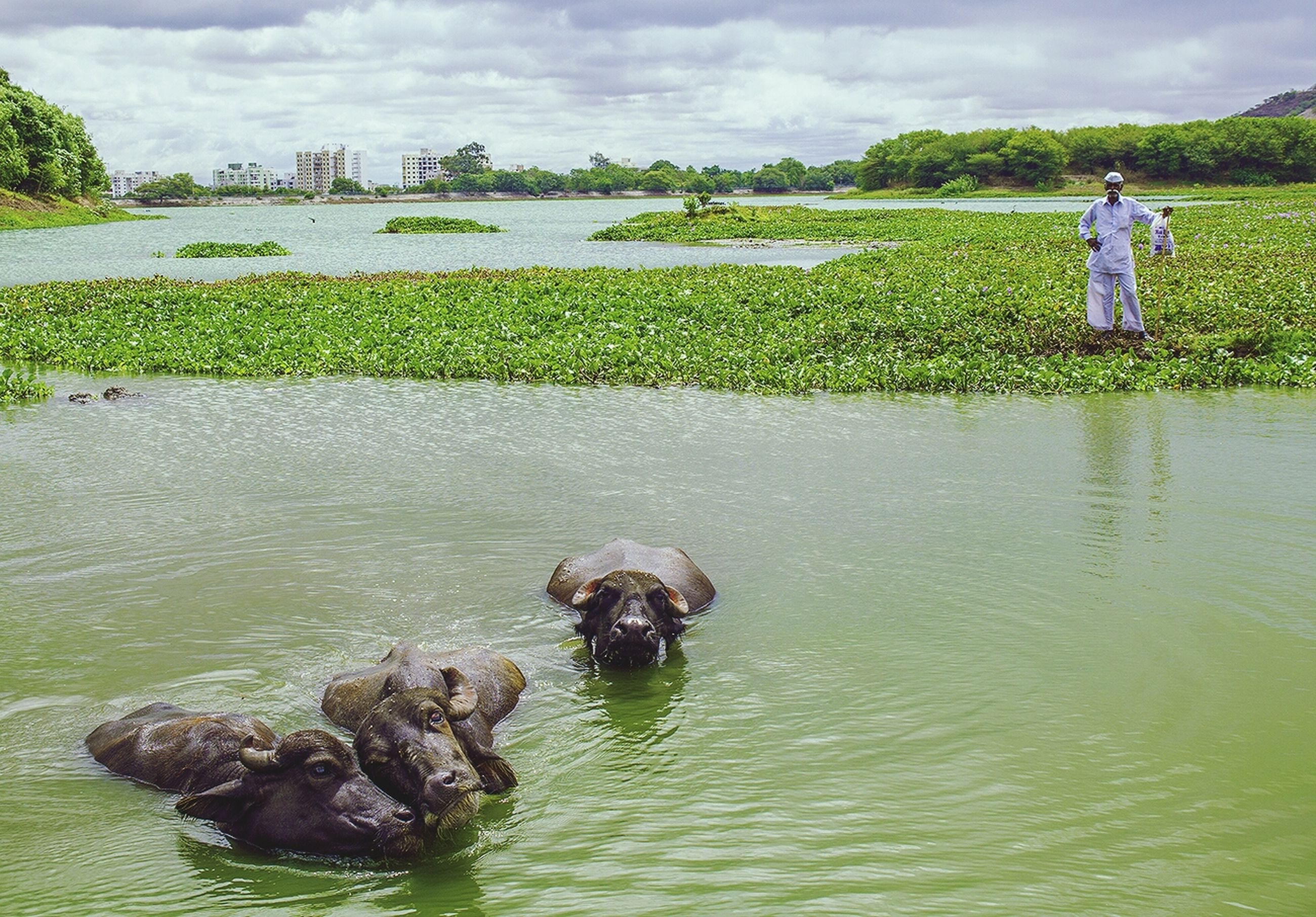 water, sky, cloud - sky, grass, lake, rippled, nature, waterfront, tranquility, green color, tranquil scene, reflection, cloud, beauty in nature, day, cloudy, scenics, outdoors, river, dog