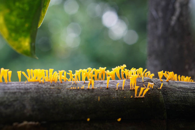 Yellow mushrooms 🍄 Selective Focus Plant Close-up Yellow Nature Growth Freshness Tree Trunk Trunk Beauty In Nature Mushroom Mushrooms EyeEmNewHere