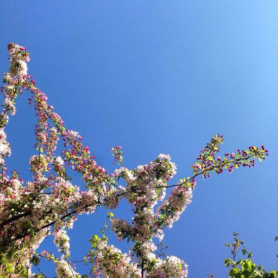 Blossom Spring Spring Flowers