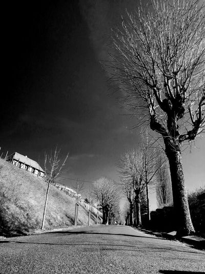 Black And White Blackandwhite Black & White Street Photography Unforgettable ♥ Unforgettable Unforgettable Moment Tree Sky Bare Tree